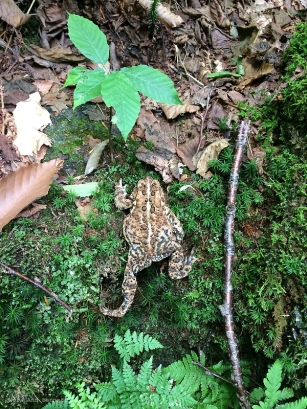 One of many toads we saw along the trail.