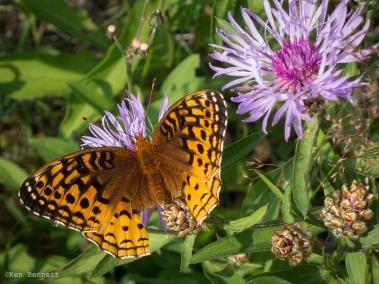 Butterfly on some flowers in an open ski run.