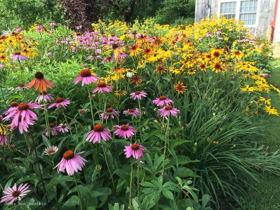 A large flowerbed at Nye's Green Valley Farm.